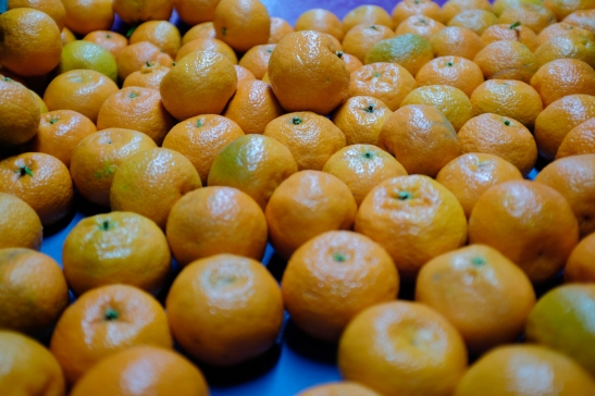 Bitter oranges (1 of 1)-2